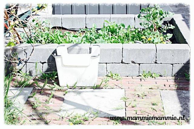 Onkruid in tuin